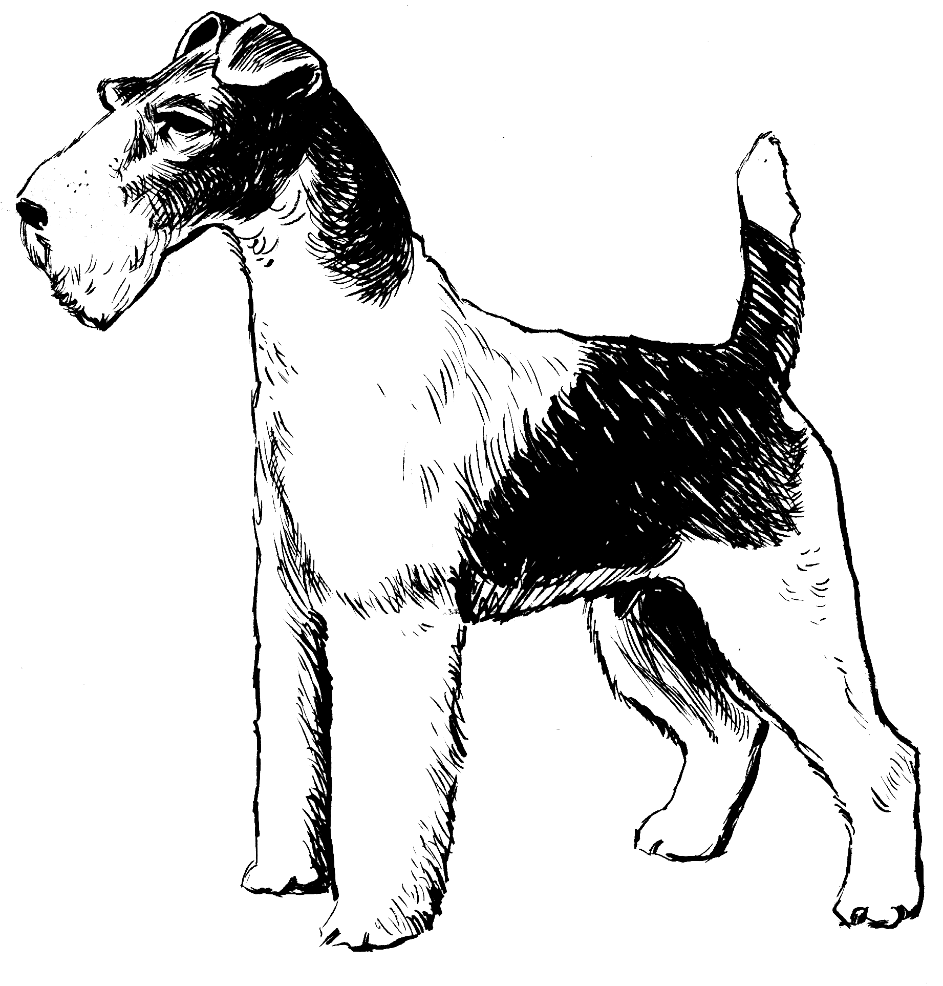 File:Fox Terrier - Wire (PSF).png - Wikimedia Commons