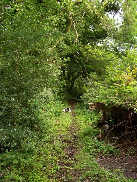 File:Green lane - geograph.org.uk - 532351.jpg