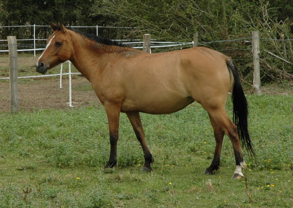 Http Commons Wikimedia Org Wiki File Horse 2005 08 06 Cheval Jpg