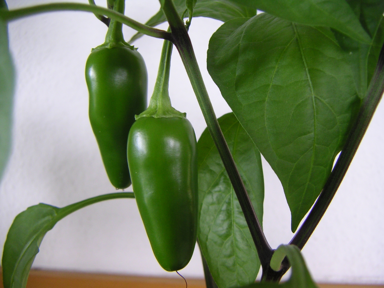 https://upload.wikimedia.org/wikipedia/commons/d/d6/Immature_jalapeno_capsicum_annuum_var_annuum.jpeg