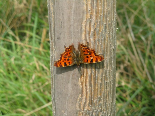 Inverted Comma - geograph.org.uk - 956712