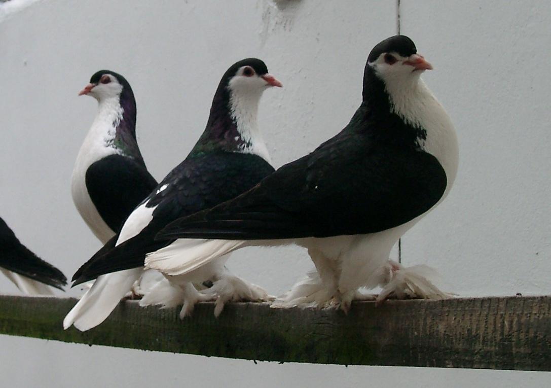 کبوتر سبز File:Lahore 1.jpg - Wikimedia Commons