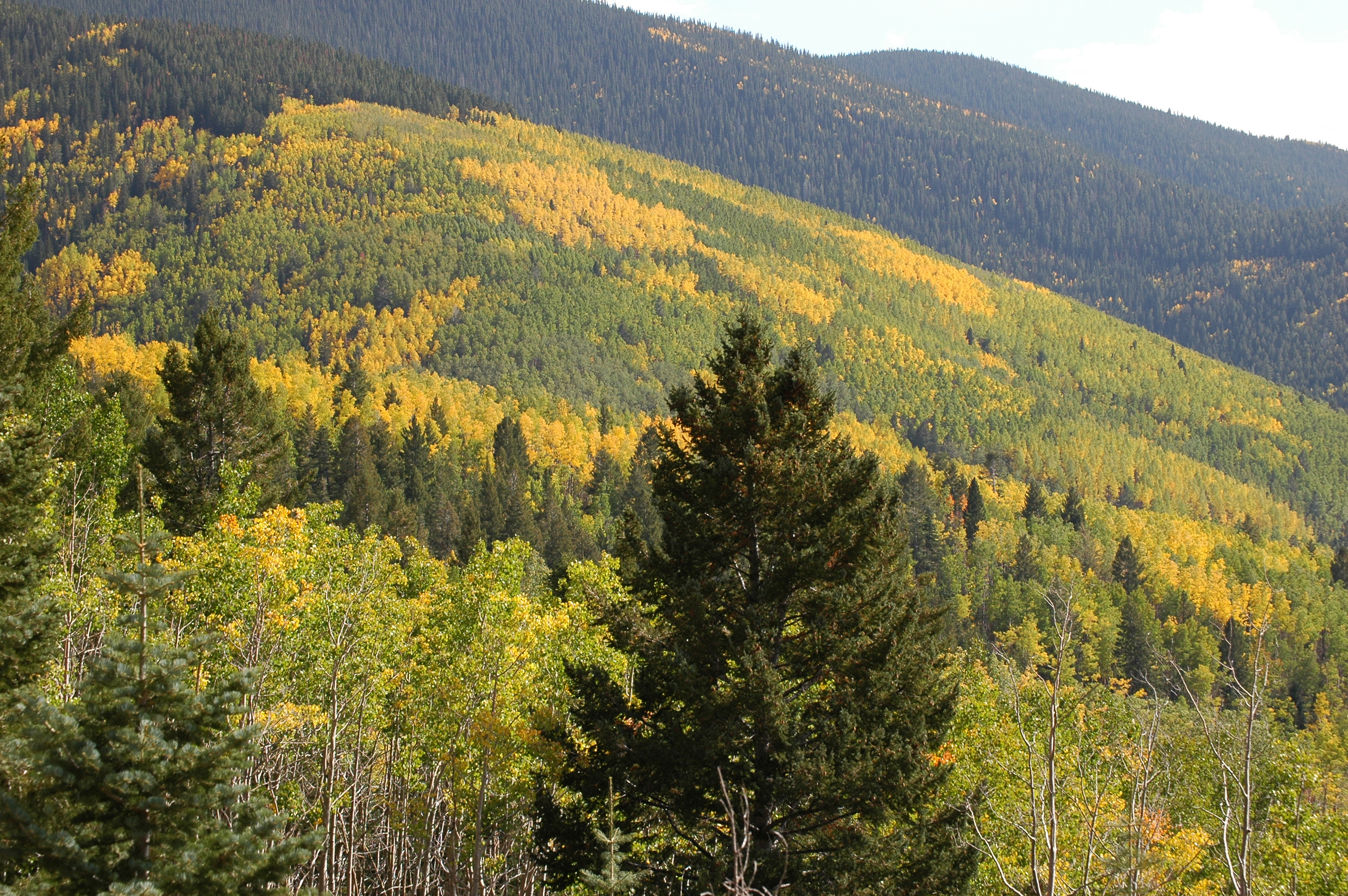 Mixed Forest Meddic