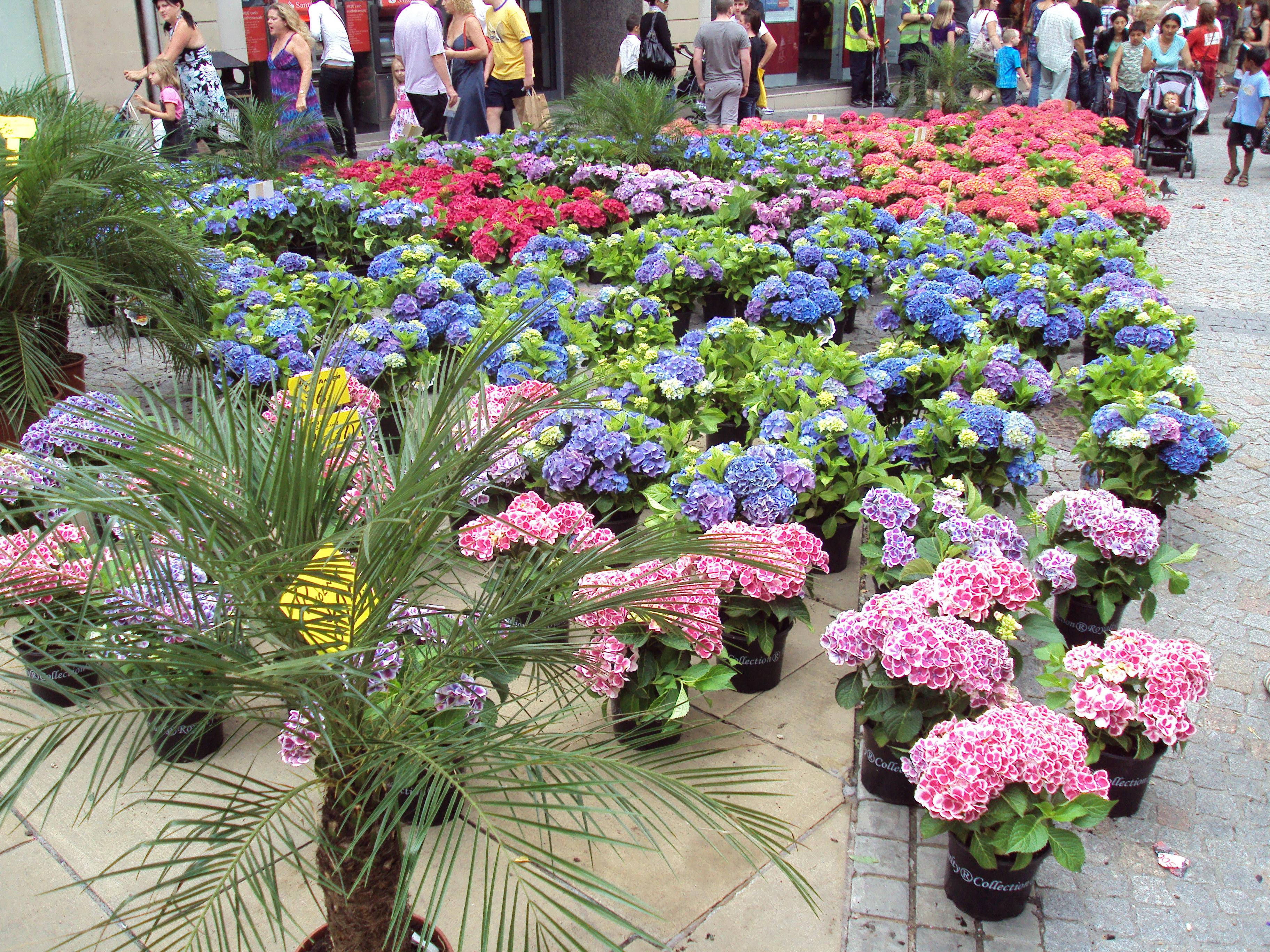 File outdoor flower stall sheffield dsc07459 jpg for Plants for outdoor garden