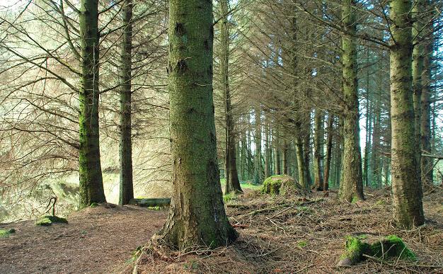 Path, Castlewellan Forest Park - geograph.org.uk - 1247294