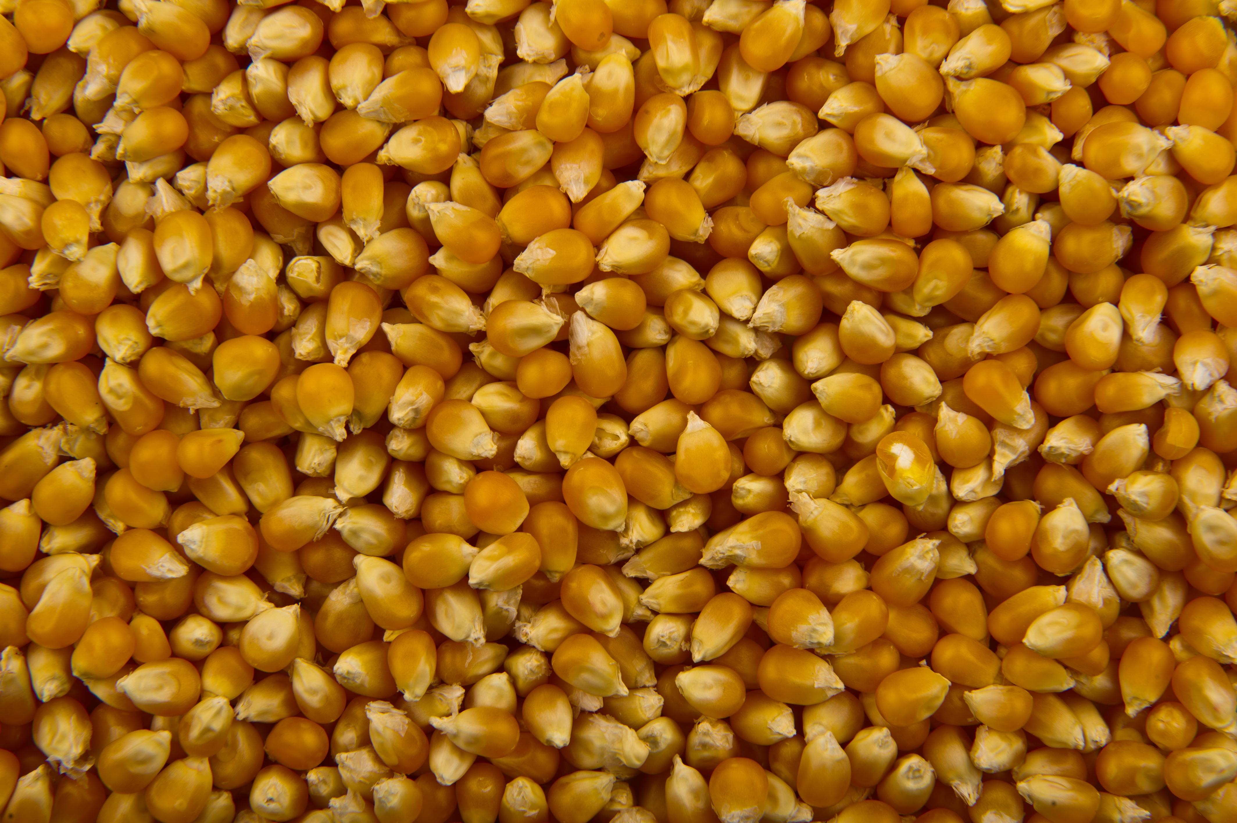 Popcorn - Wikipedia