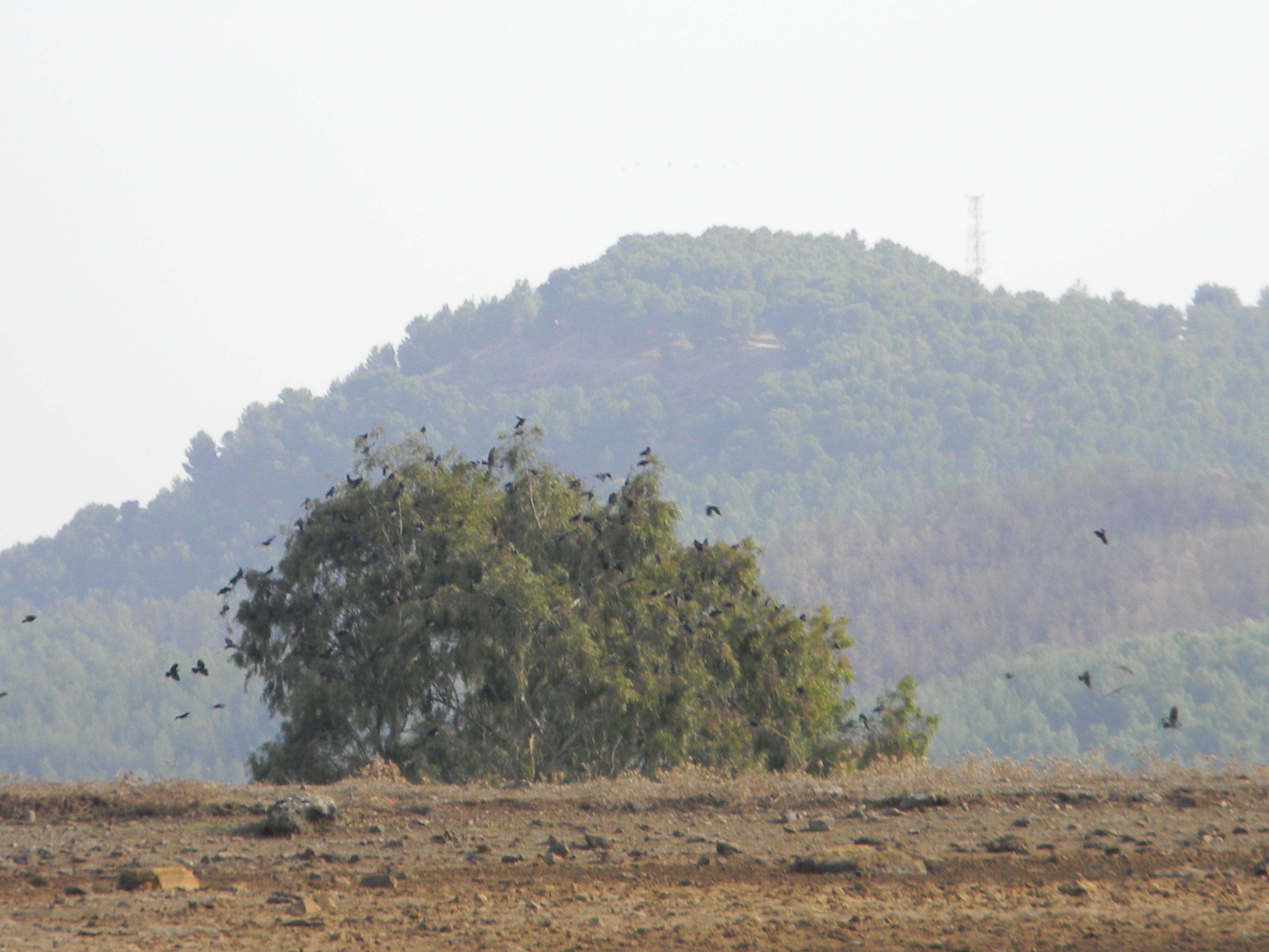 جبل كنعان ويكيبيديا