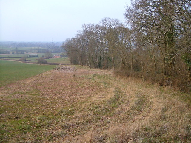 Southern edge of Ashclyst Forest - geograph.org.uk - 141271