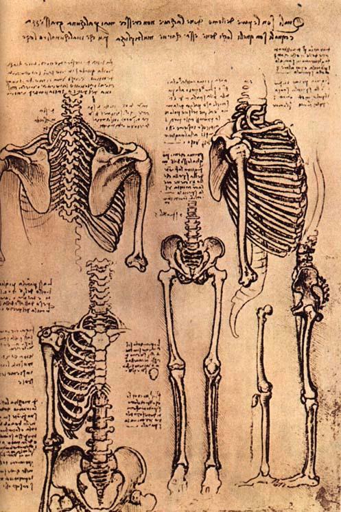 Oberarmknochen – Wikipedia