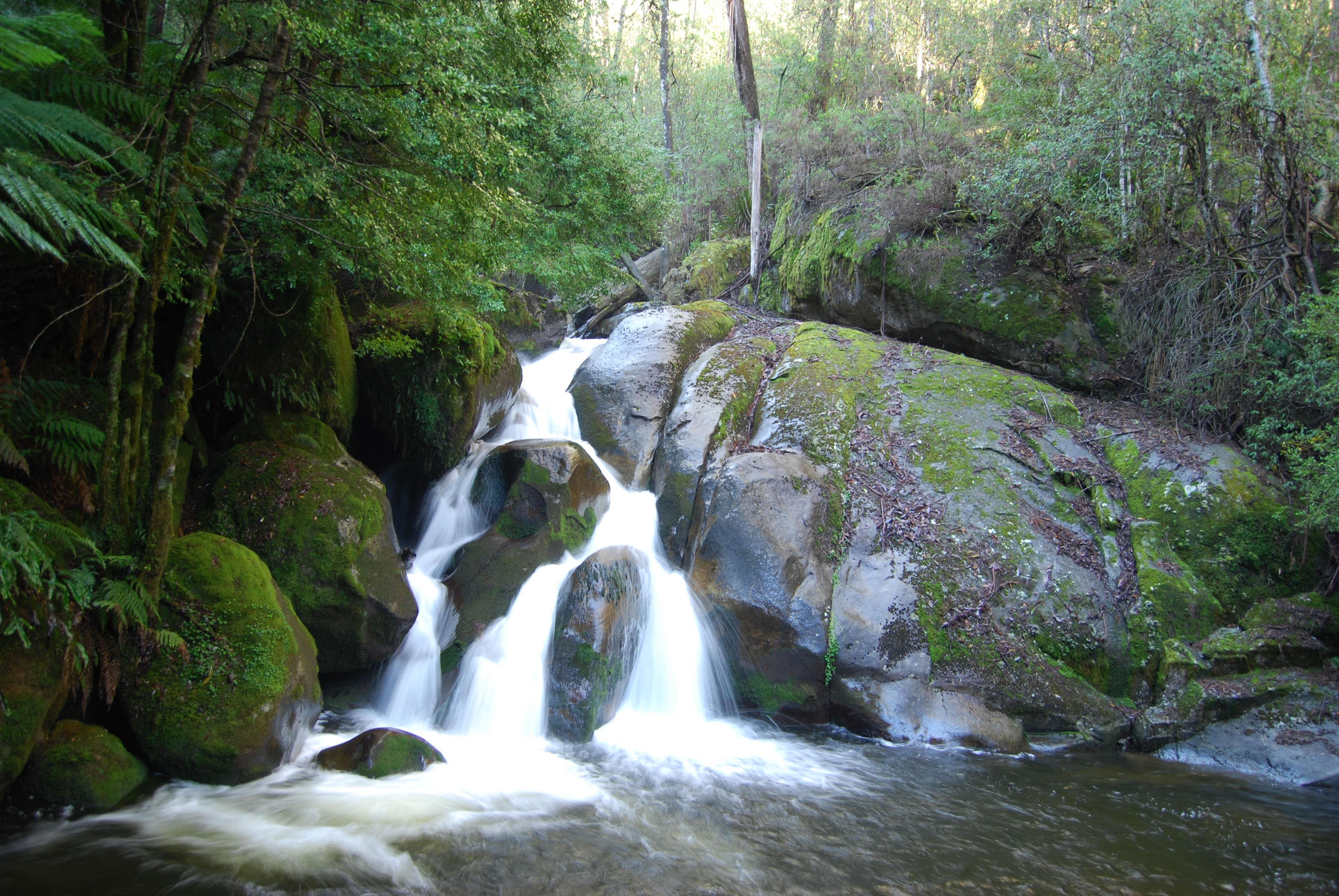 Forest Park Nature Center Photo Contest