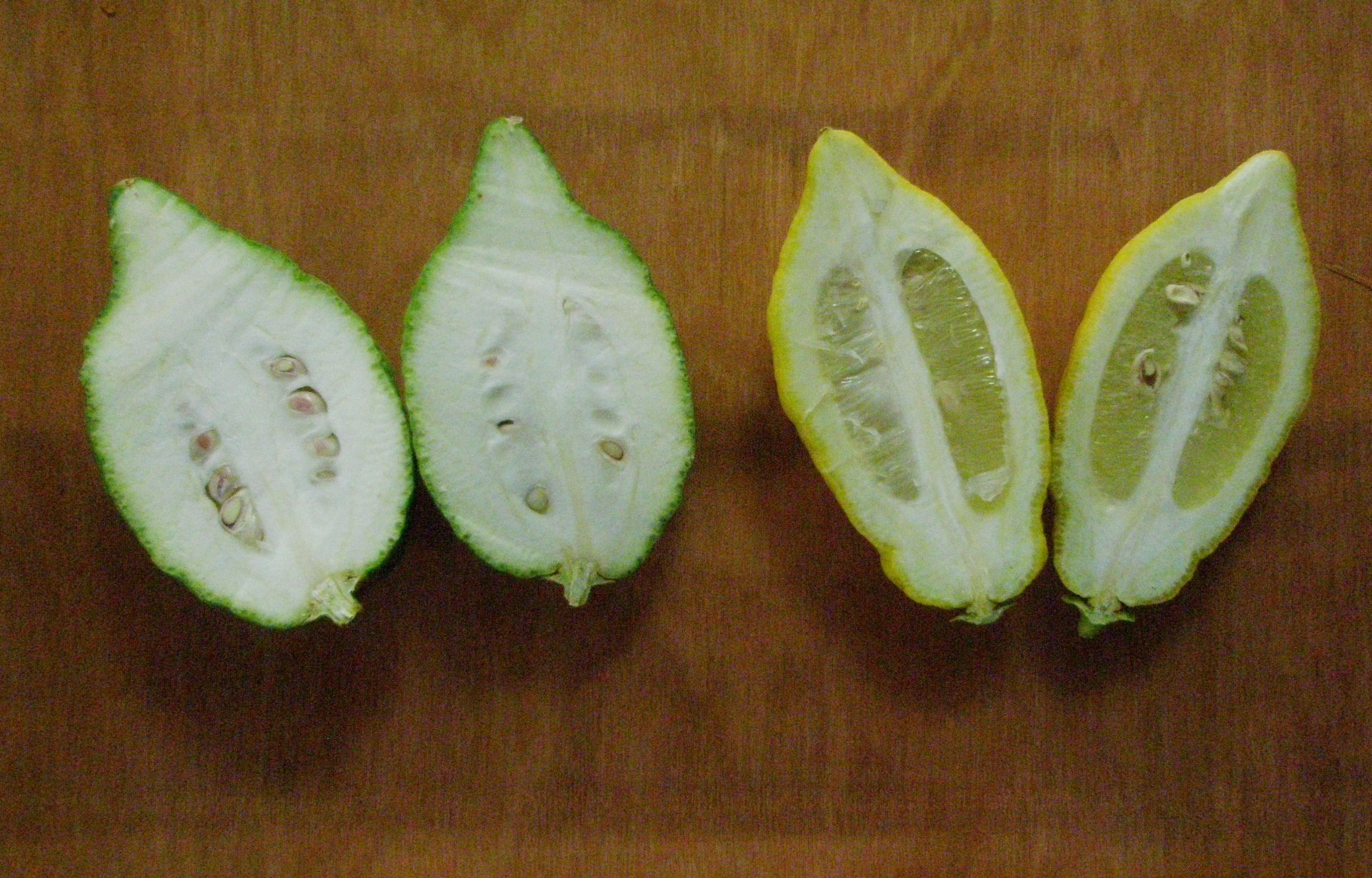 Two citrons.JPG