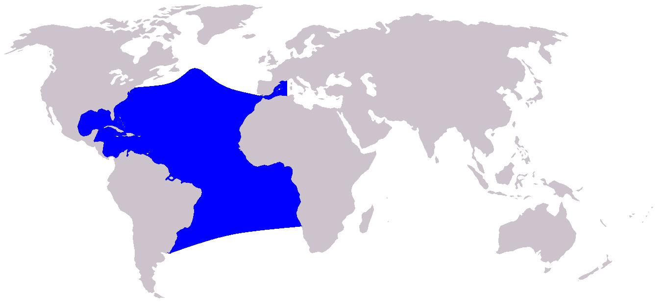 Map range Atlantic spottes dolphin Stenella frontalis