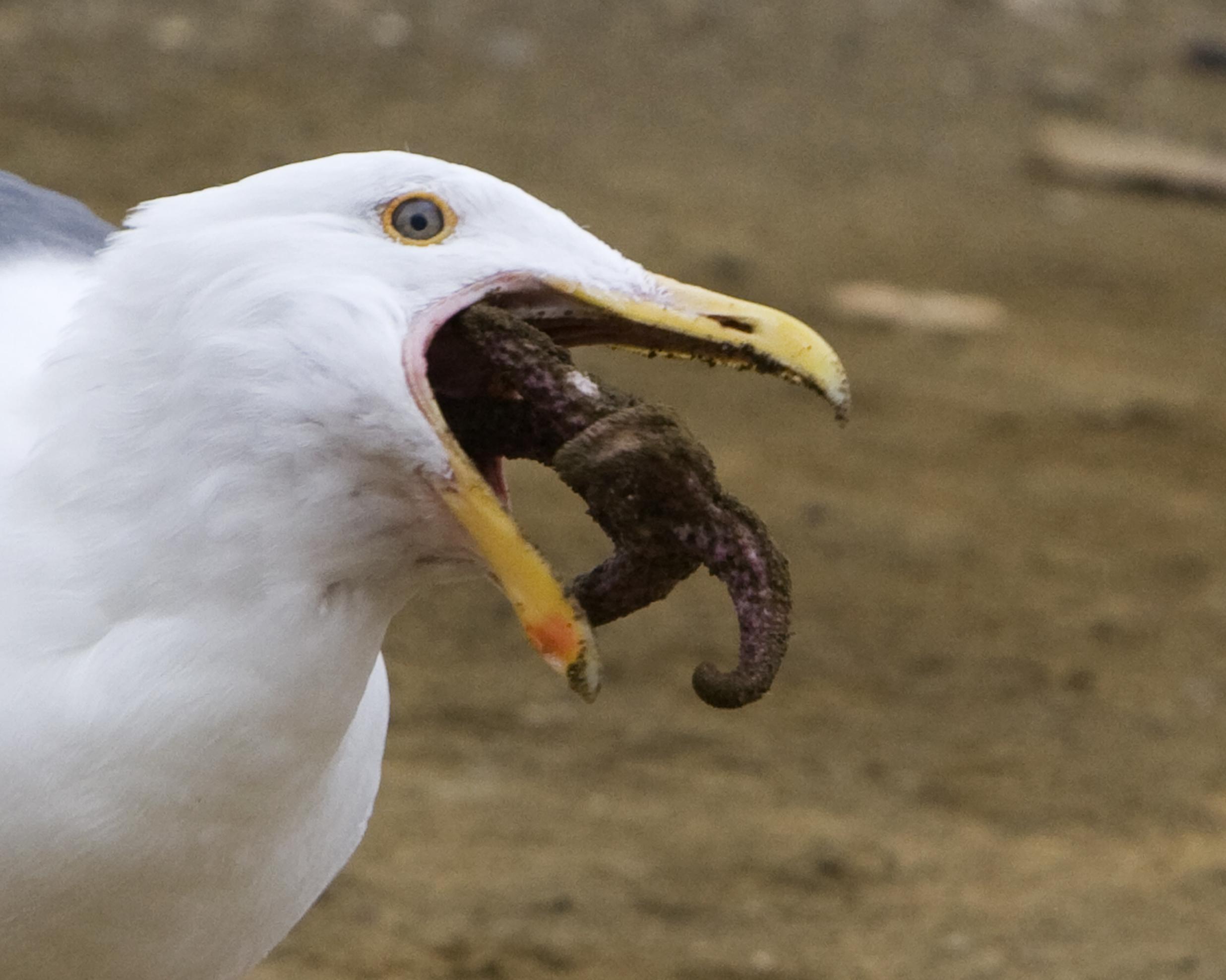 Bird Eating Bird Food