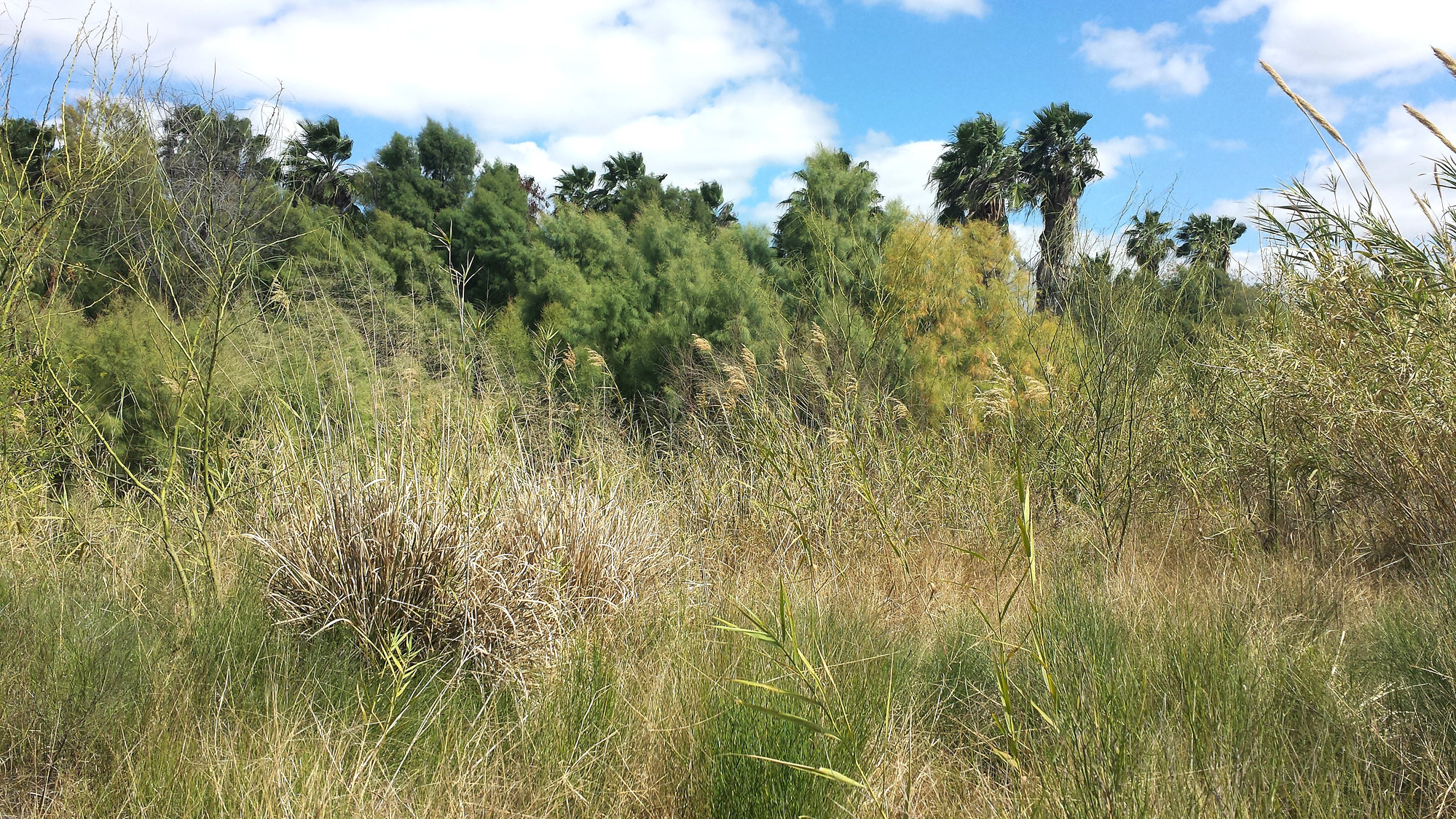 Las Palmas Trail Scenery