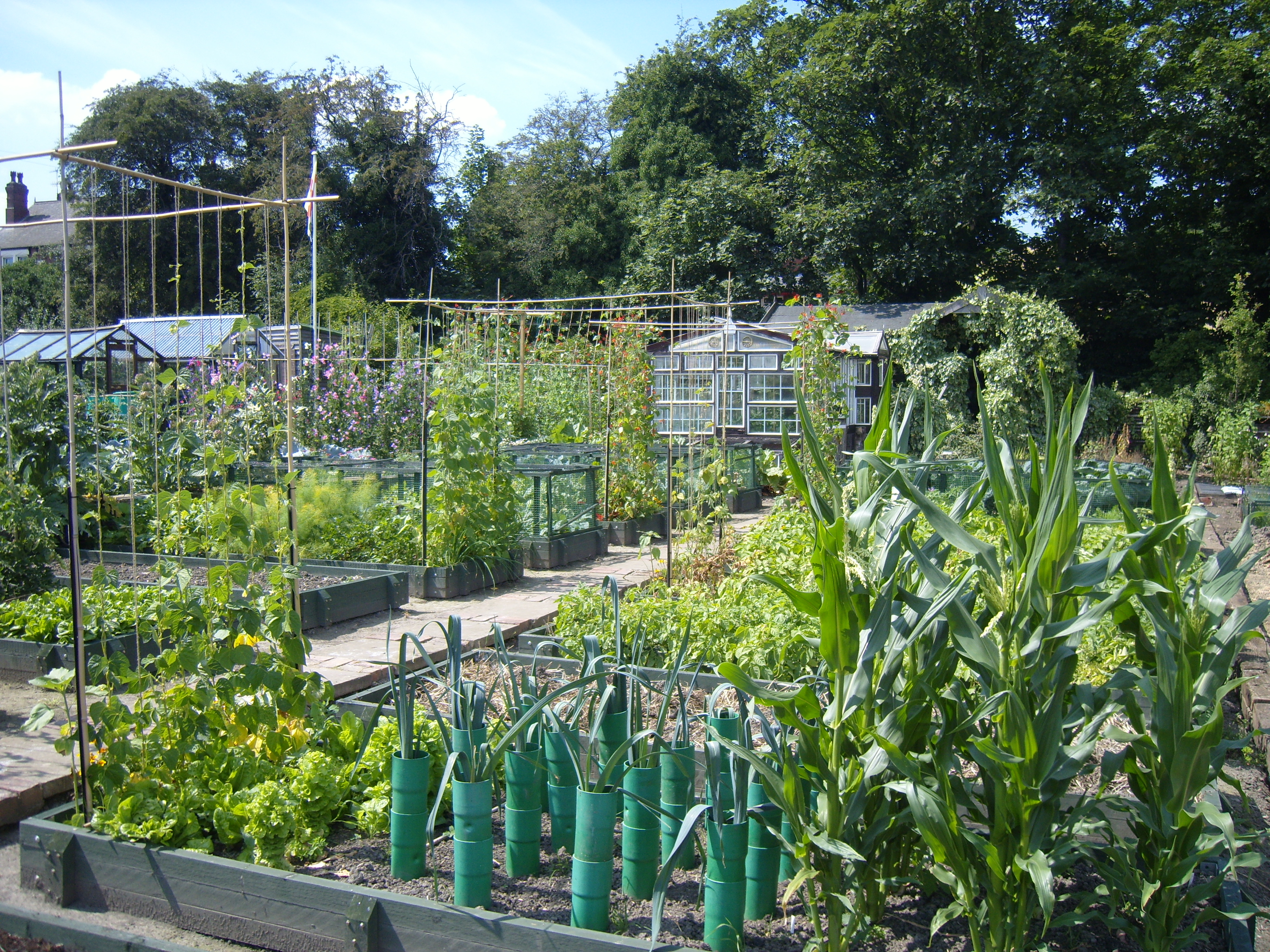 File A Yorkshire Allotment Jpg Wikimedia Commons