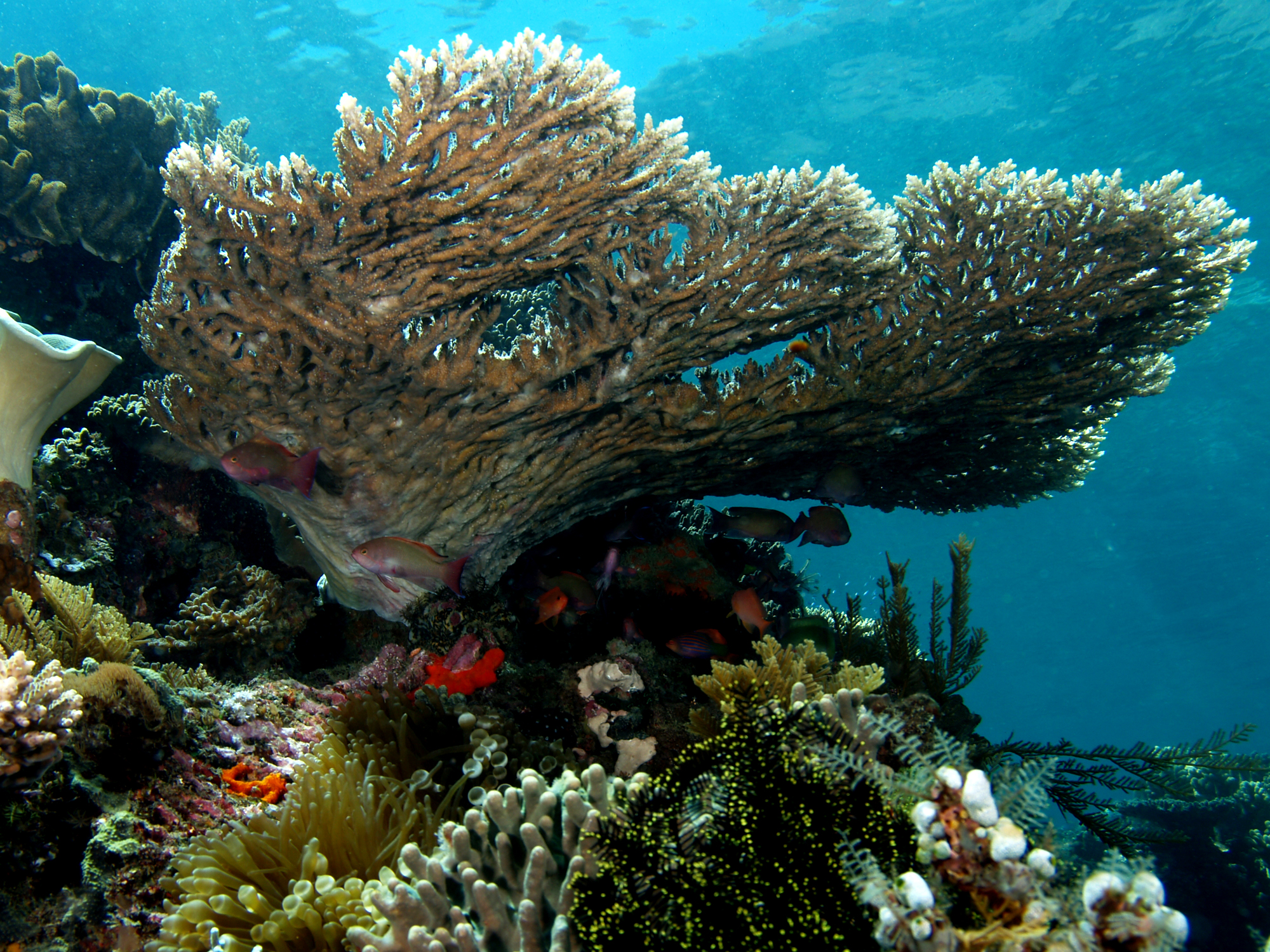 Can Artificial Reefs Replace The Natural Ones