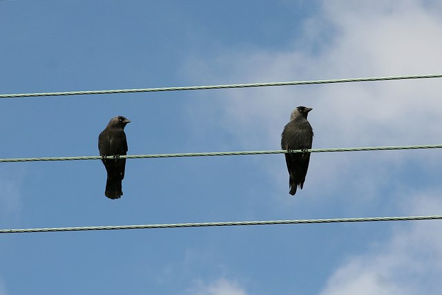 Bird on a wire - geograph.org.uk - 876009