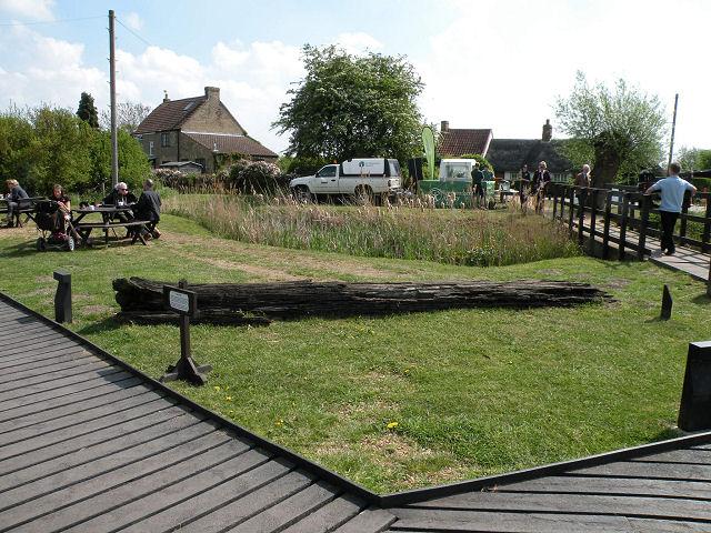 Bog Oak at Wicken Fen - geograph.org.uk - 1281100
