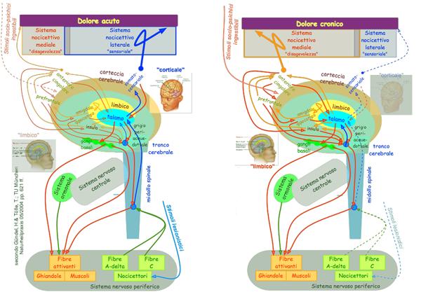 Elaborazione somatica dei dolori acuti e cronici