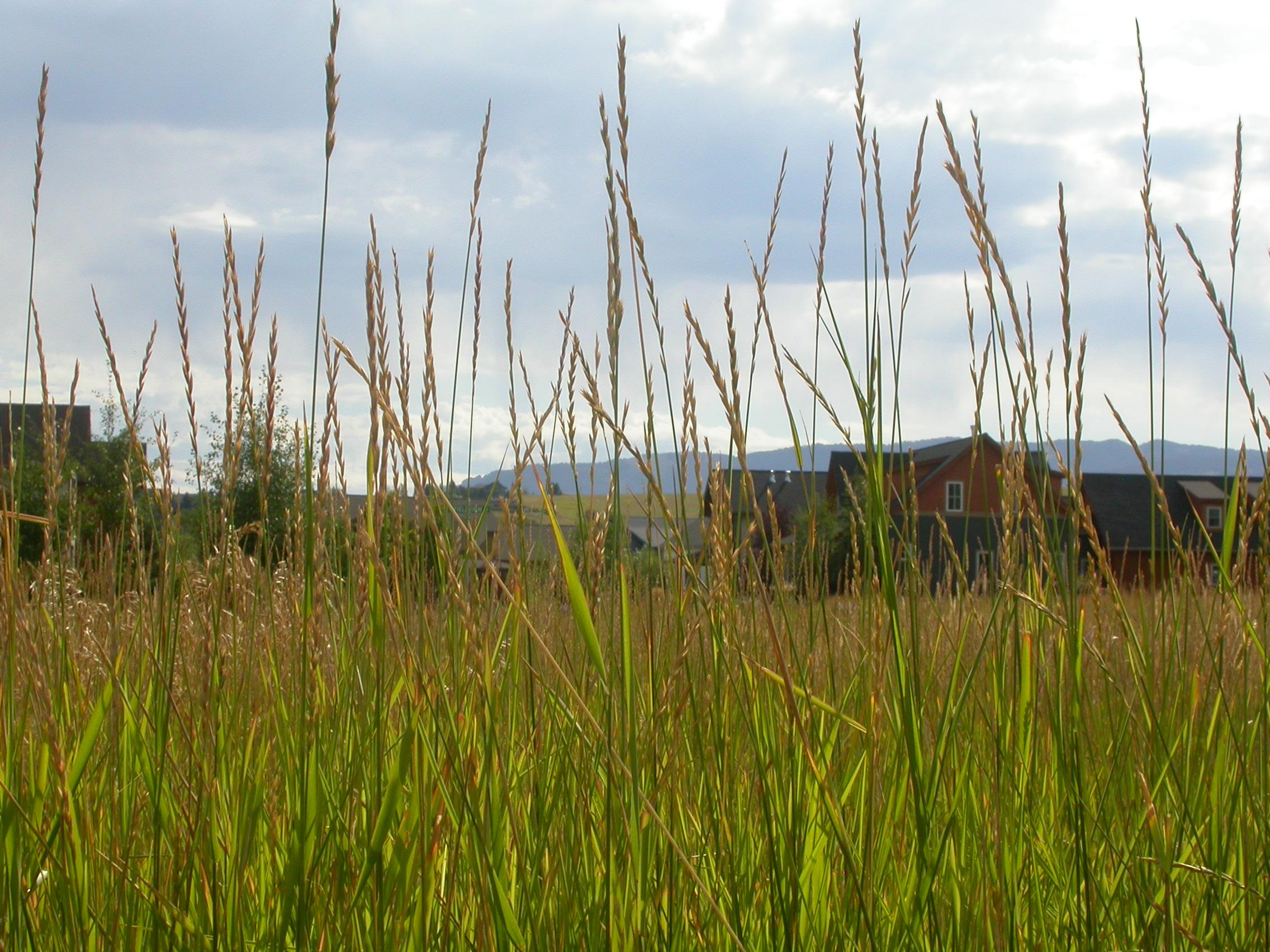 site de rencontre pour les fumeurs de mauvaises herbes