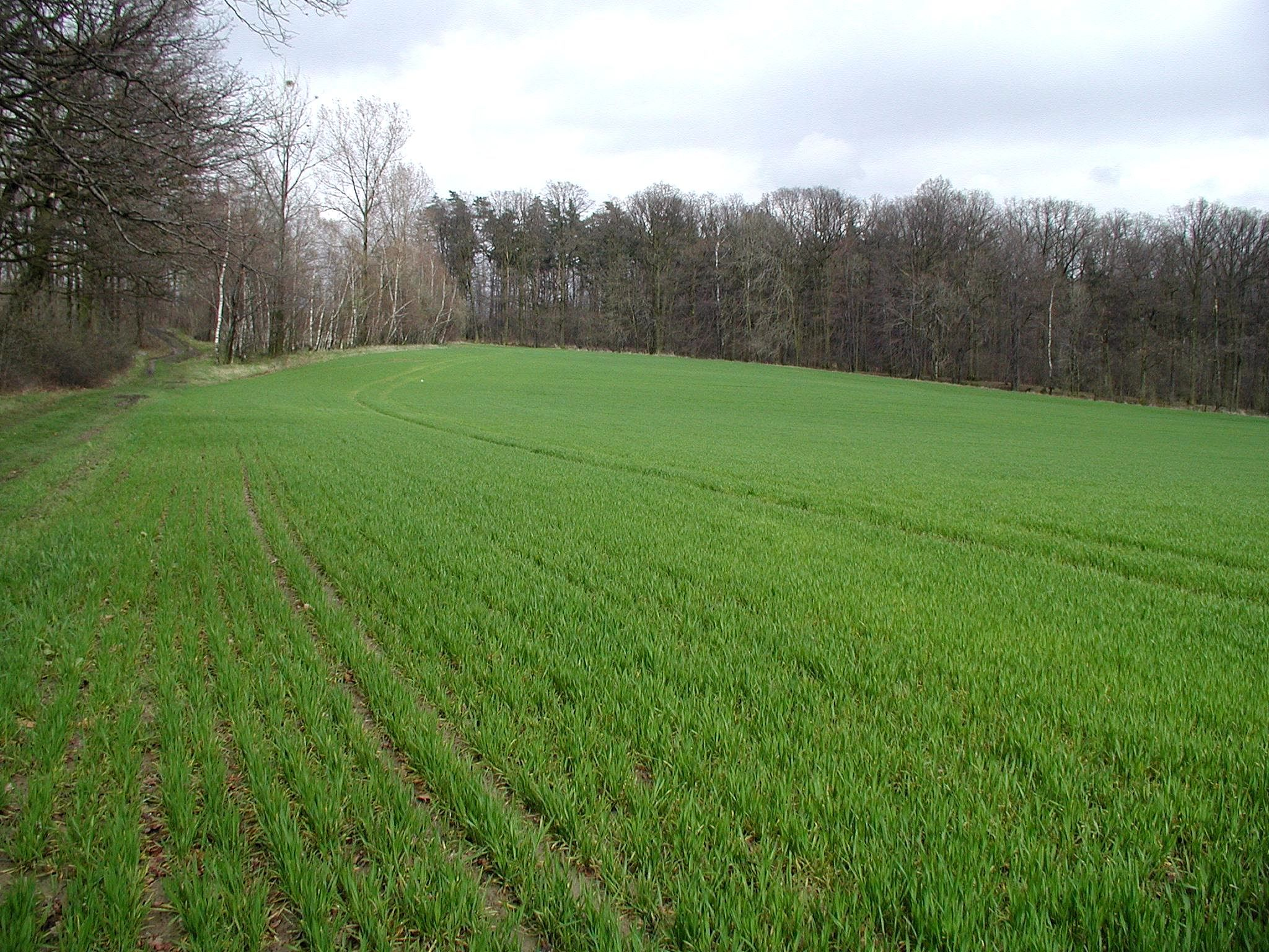 File:Field Green Pasture.jpg