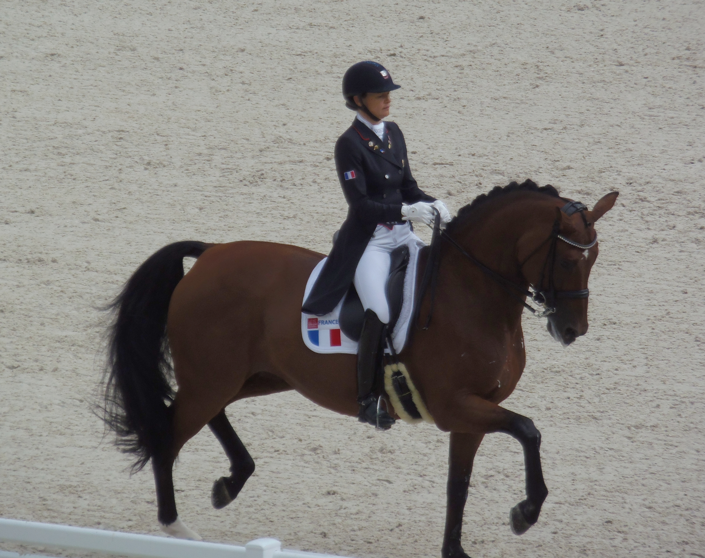 About jessica michel dressage rider france upclosed for Xavier dujardin biographie