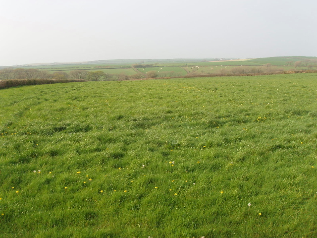 fields and grass - photo #16