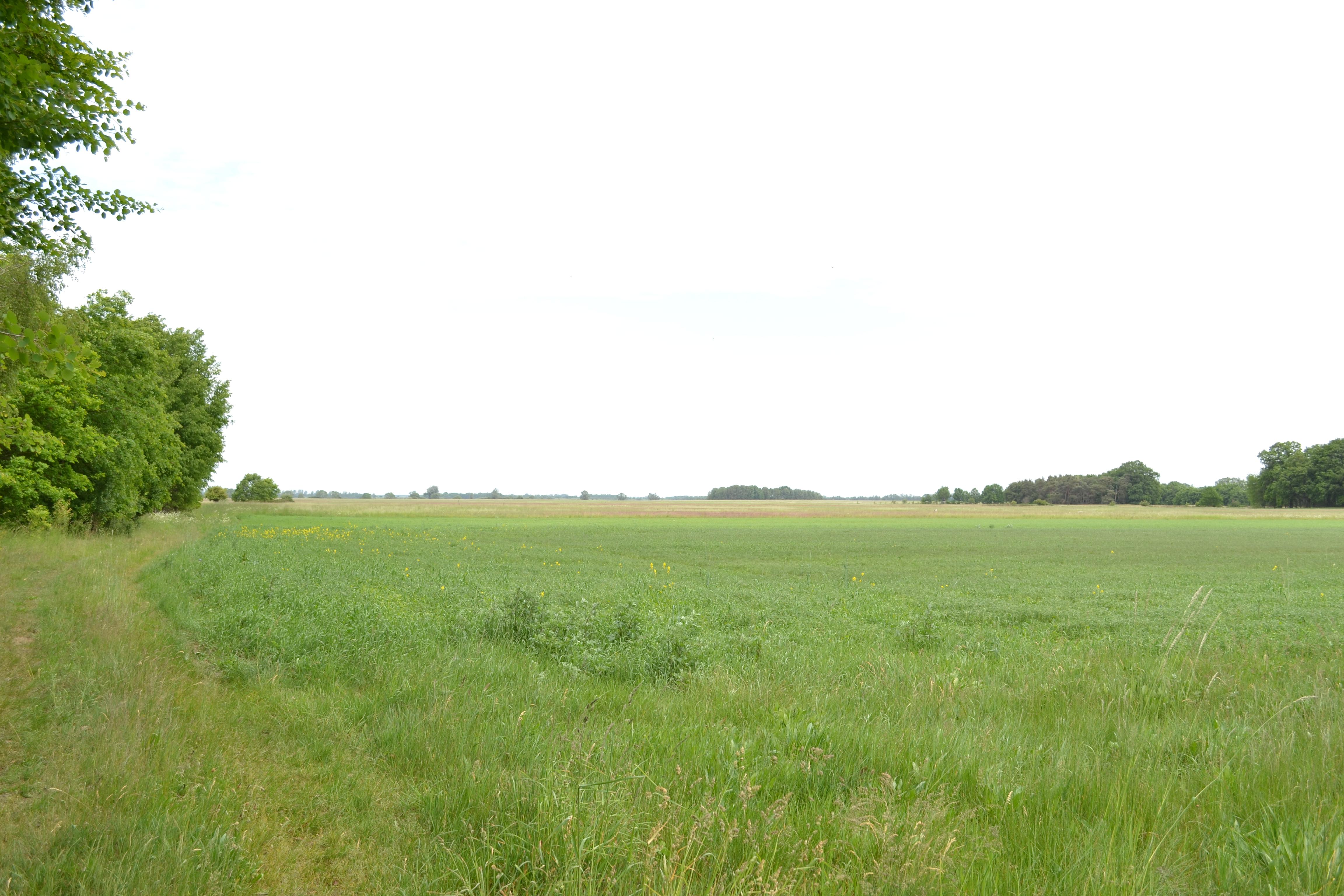 Bestand habitat of the great bustard otis tarda in the Habitat deutschland