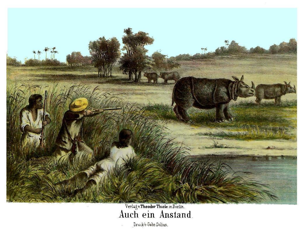 http://upload.wikimedia.org/wikipedia/commons/d/d7/Javan_Rhino_Zimmerman.jpg
