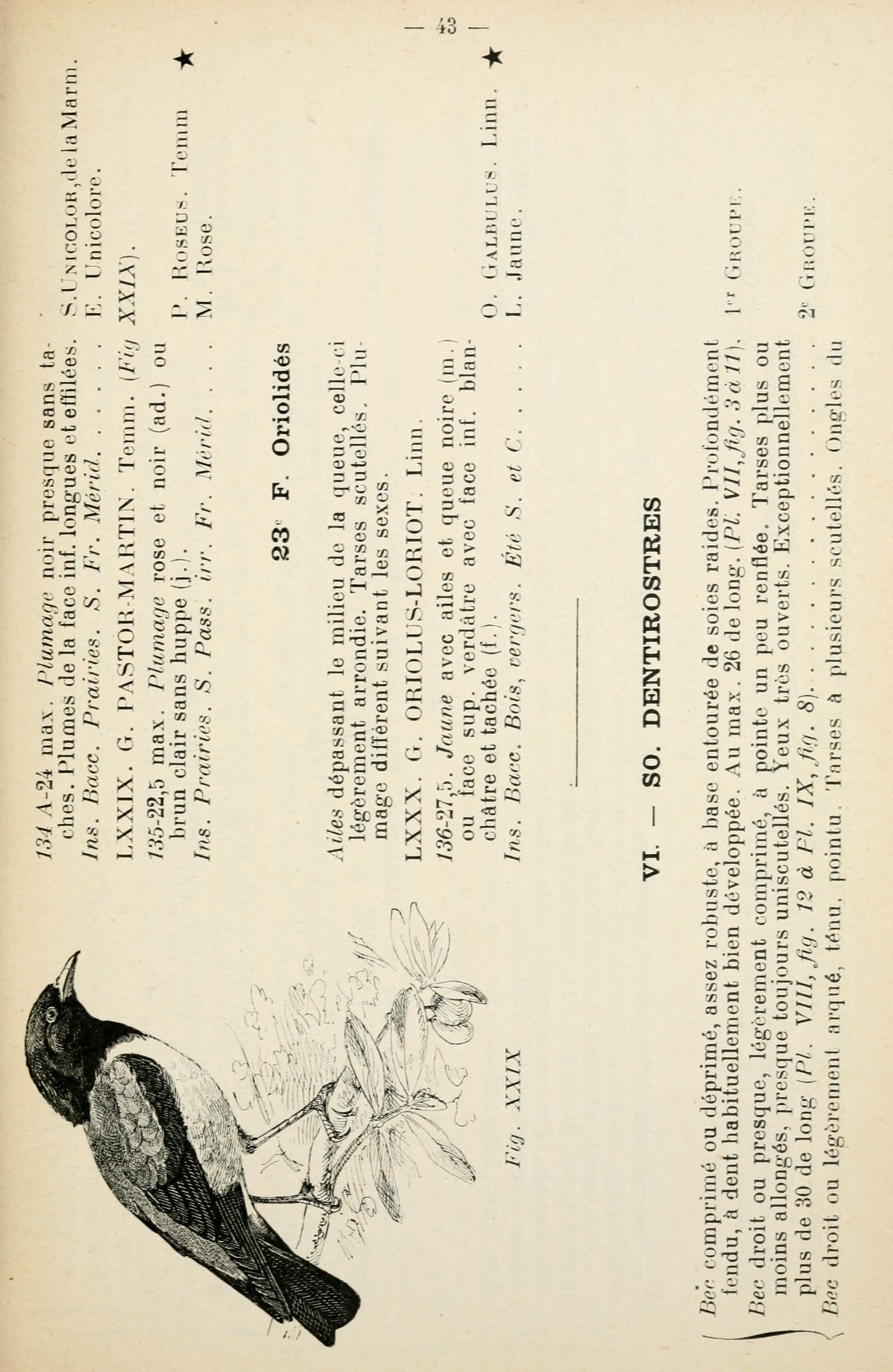 Fileles Oiseaux Deurope Page 43 Bhl7581994jpg