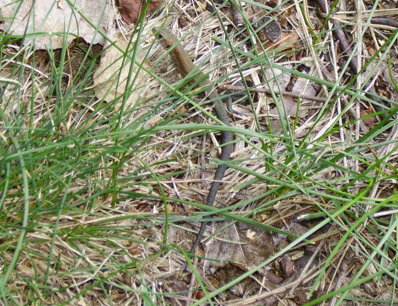 File:Lizard camouflage.jpg - Wikimedia Commons