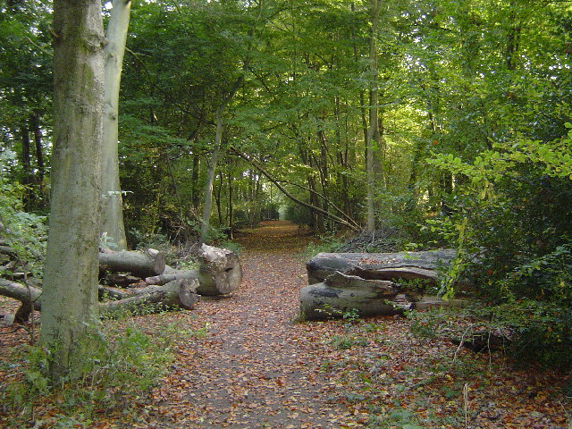 Mount Wood, Chenies - geograph.org.uk - 66970