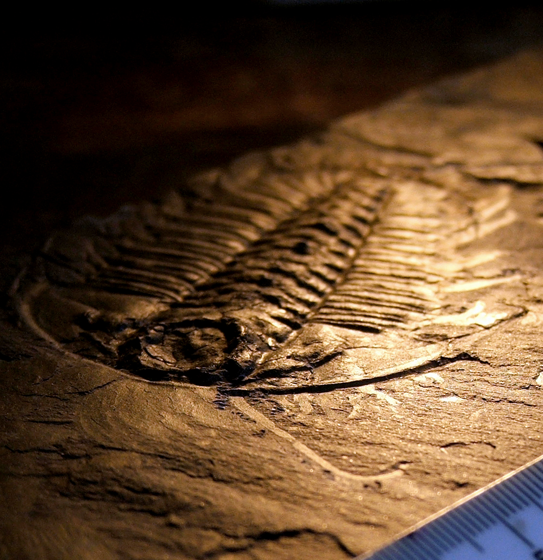 the burgess shale a type of More than half a billion years old, the fossils of the burgess shale preserve an  intriguing glimpse of early life on earth they were first discovered in 1909 by.