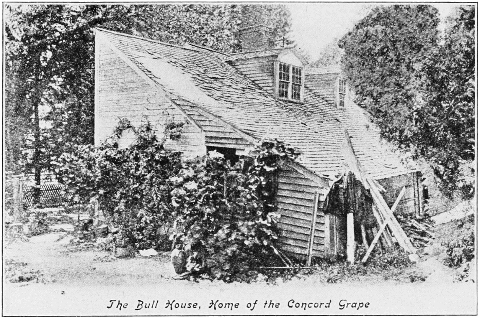PSM V82 D349 Bull house home of the concord grape.png