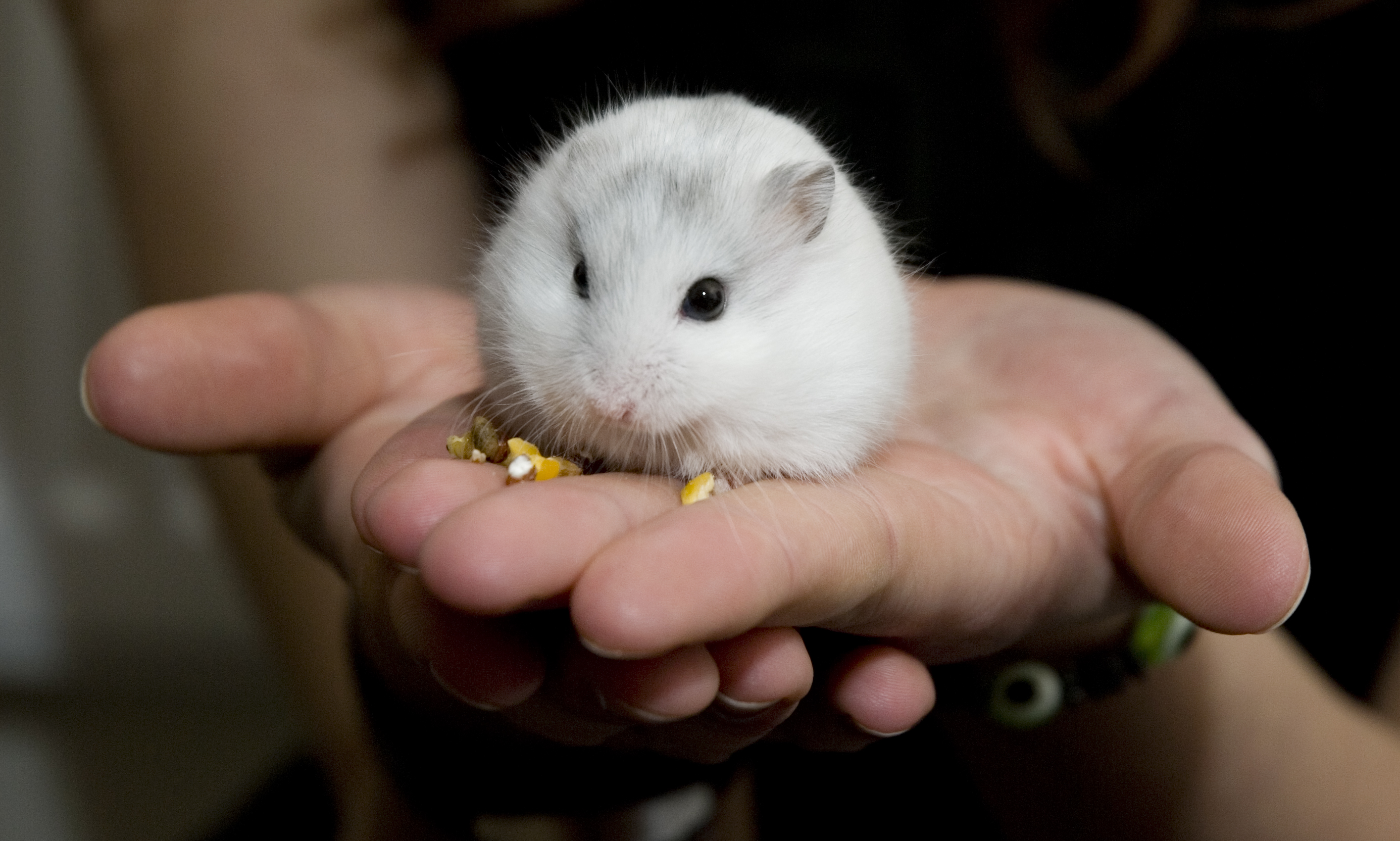 Image Result For Cute Baby Hamster