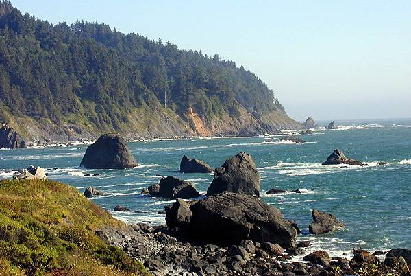 Image result for image redwood national forest pacific coast
