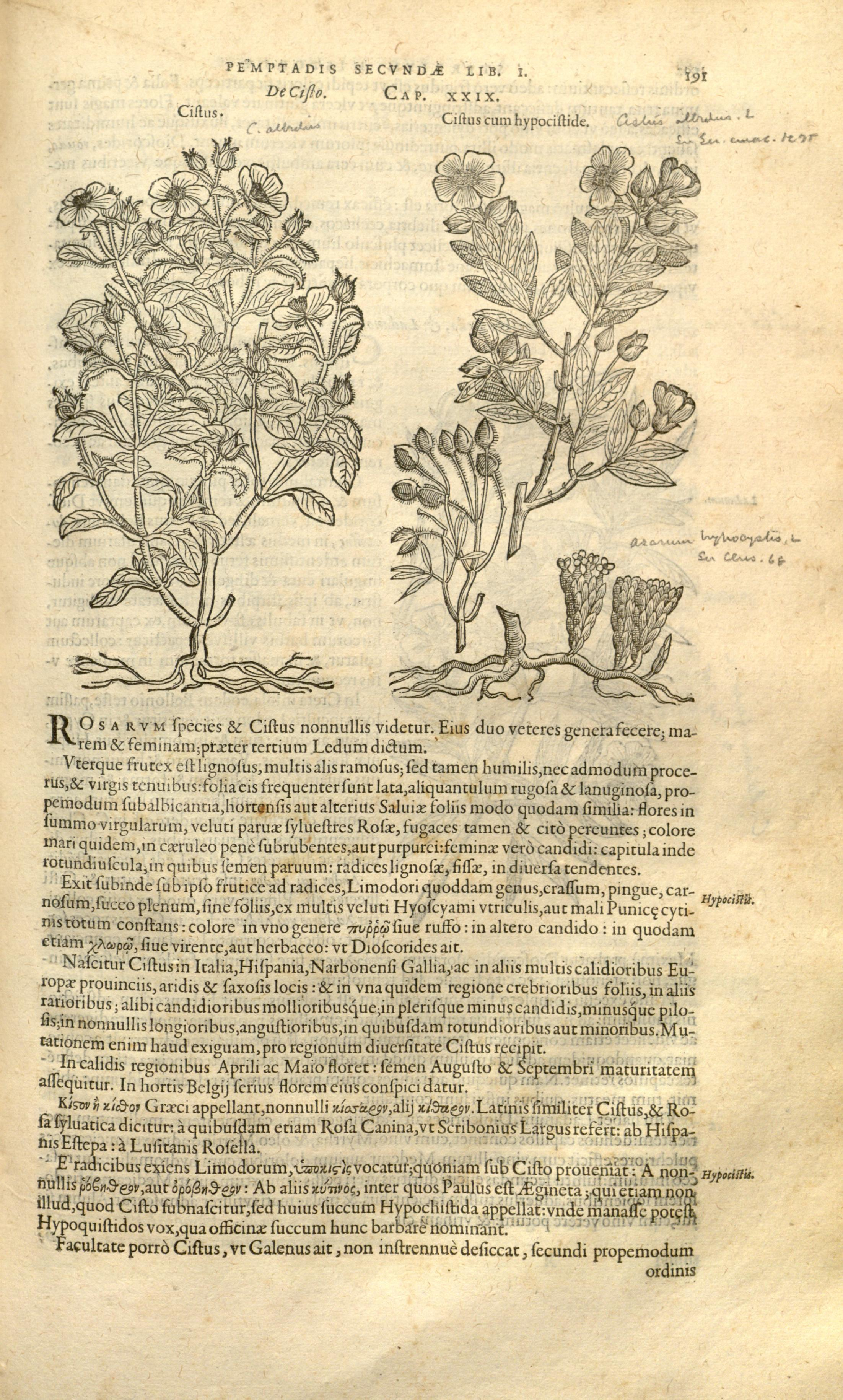 Stirpium historiae pemptades sex, sive libri XXX (Page 191) BHL8099850.jpg Remberti Dodonaei ... Stirpium historiae pemptades sex, sive libri XXX. Date 1583