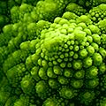 Romanesco Brassica oleracea Richard Bartz Hierarchic Cabbage Award.jpg