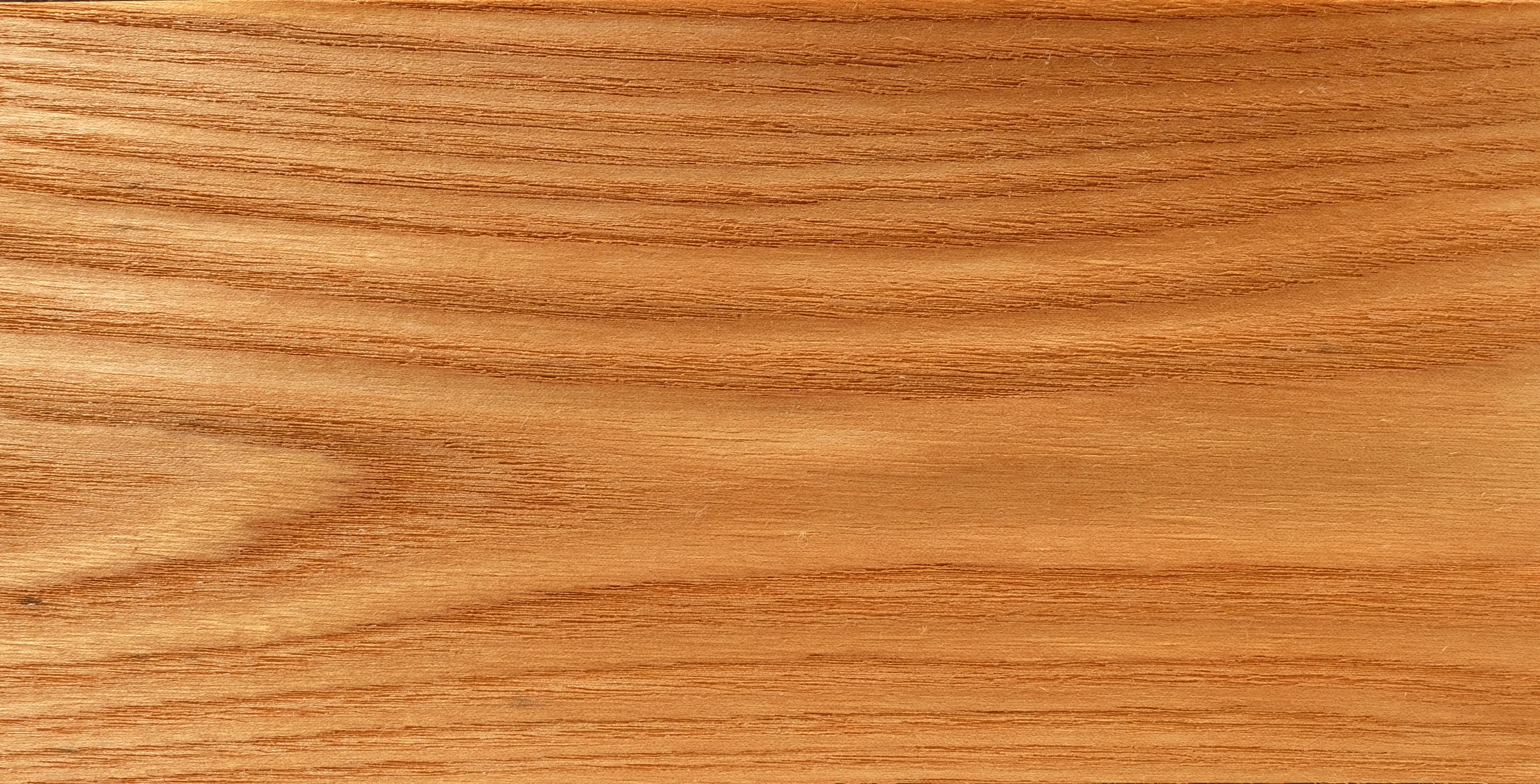 Rüster Holz file rotrüster holz jpg wikimedia commons