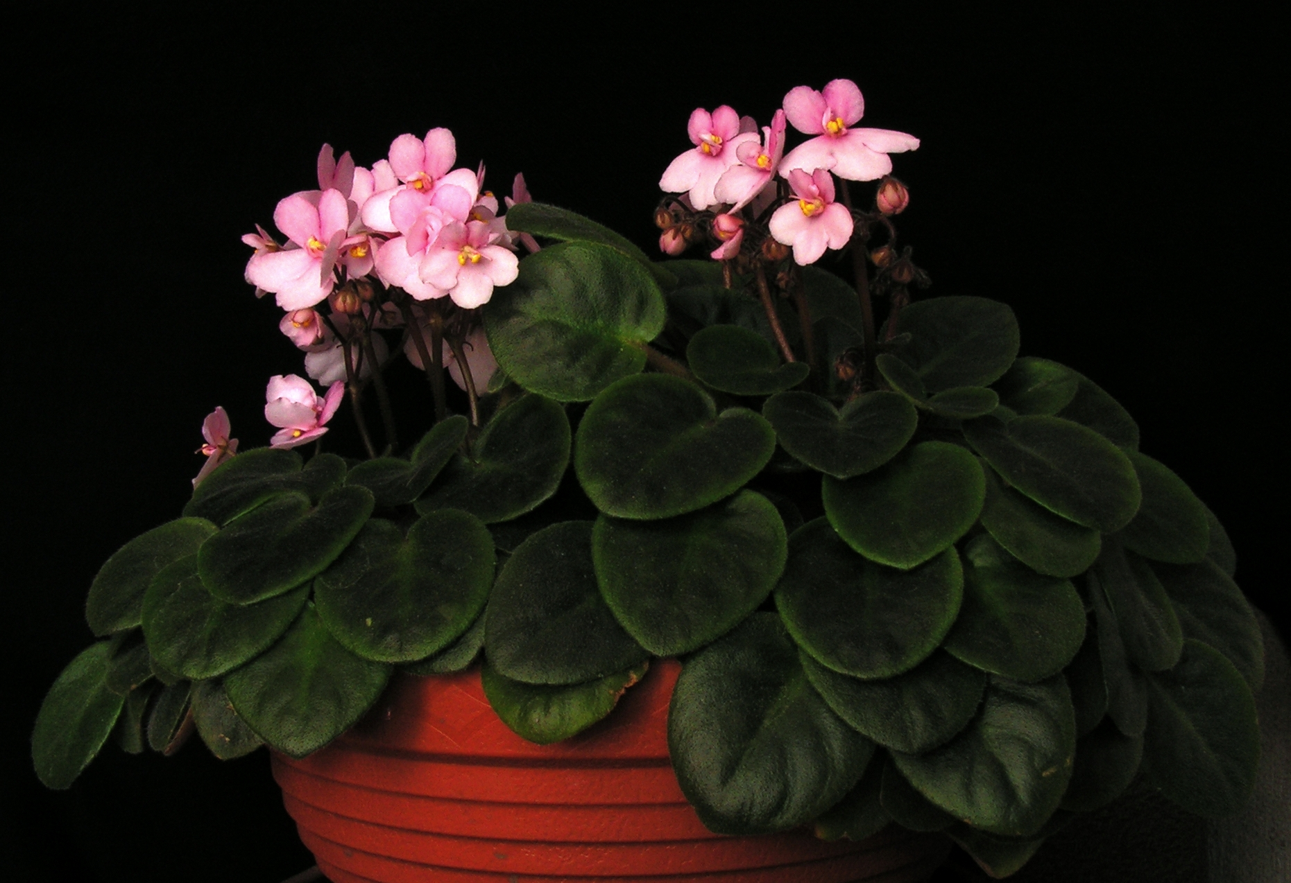 Все домашние цветы в горшке с фото