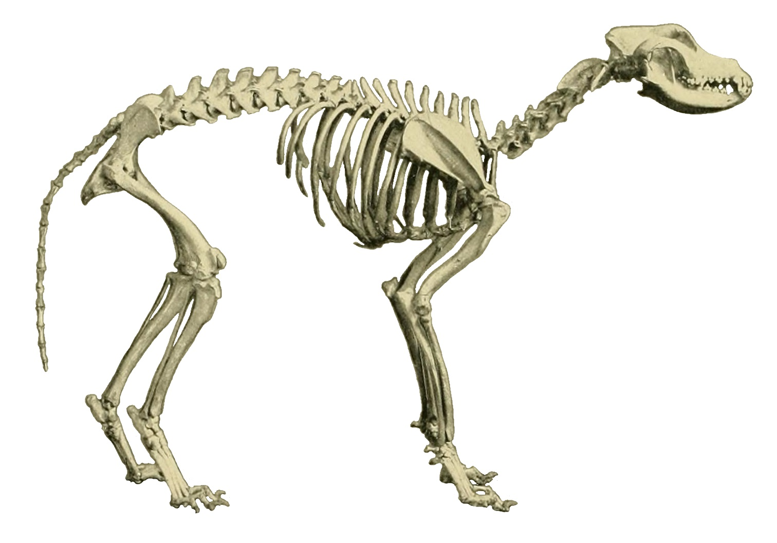 Image Result For Can Dogs Automatically
