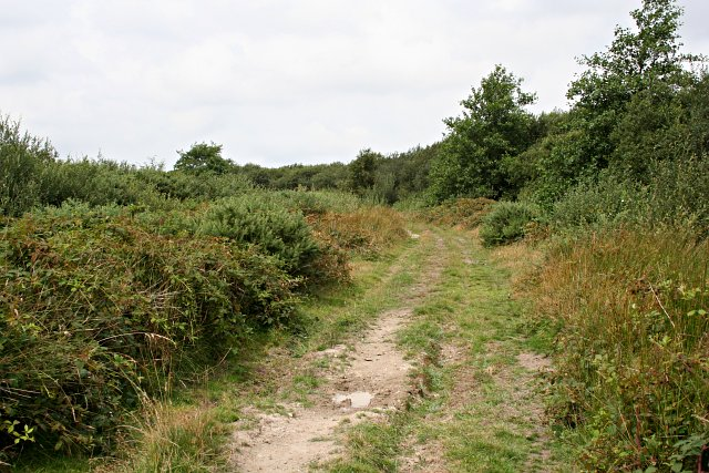Track on Goss Moor - geograph.org.uk - 222521