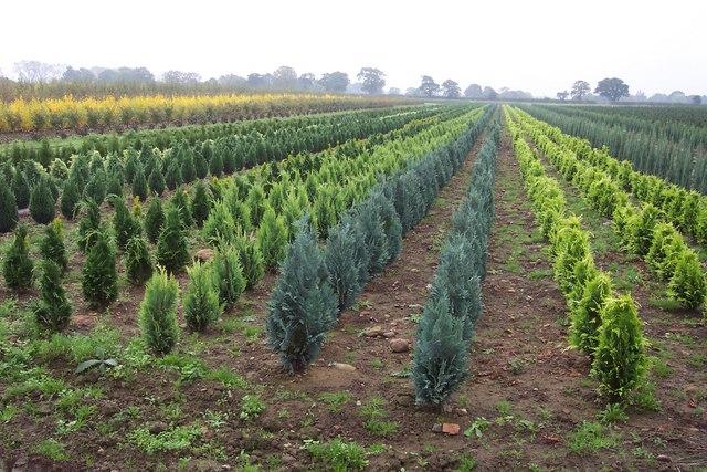A Conifer Tree Nursery Growing Seedlings In Rows Image By Jonathan Billinger