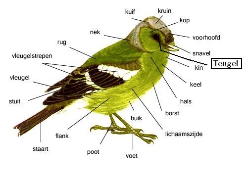 Anatomie van een vogel