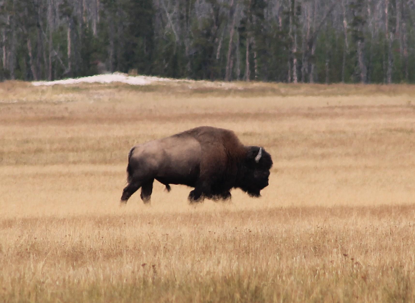 Yellowstone National Park Wikipedia - Us national parks yellowstone