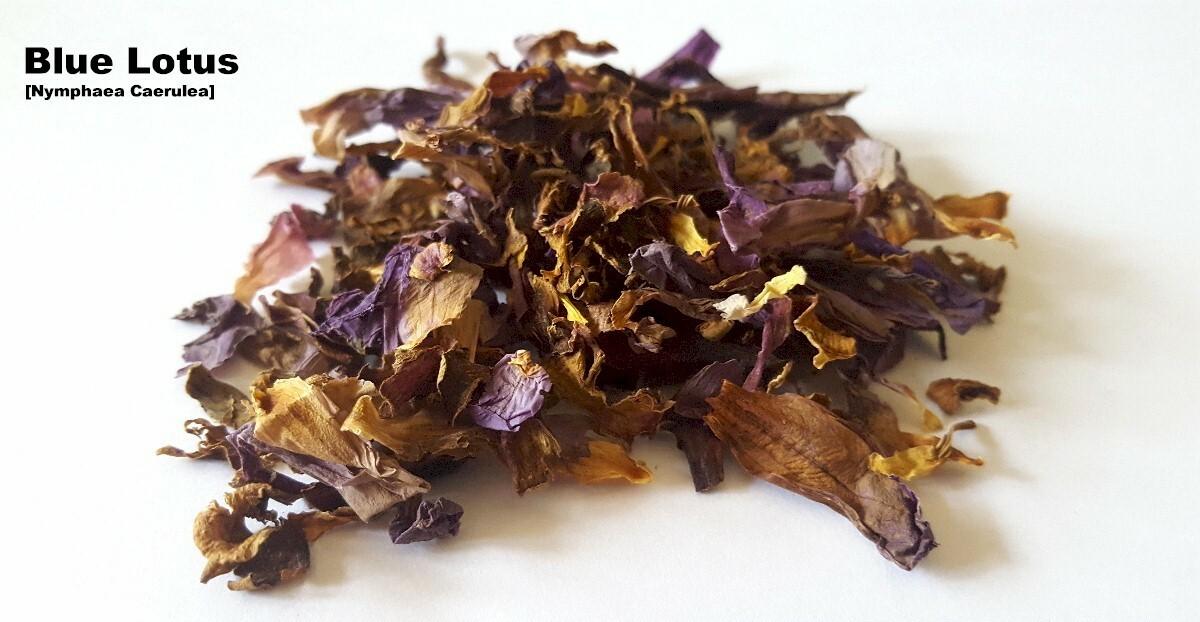 Fileblue Lotus Drugg Wikimedia Commons