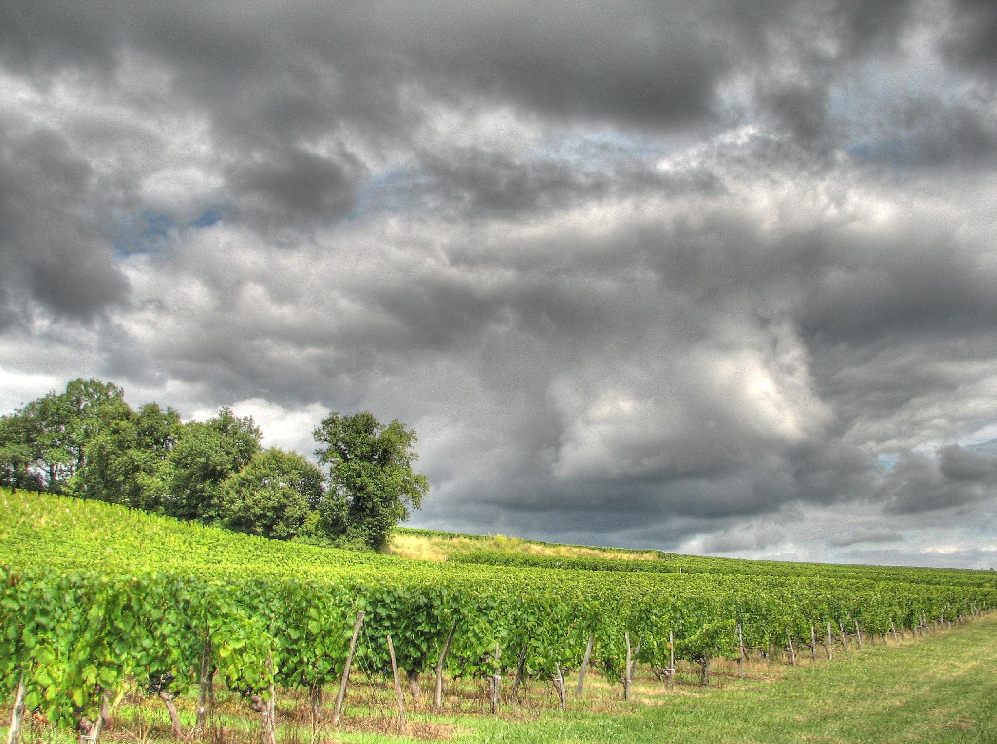 http://commons.wikimedia.org/wiki/File%3ABourg_vineyards.jpg