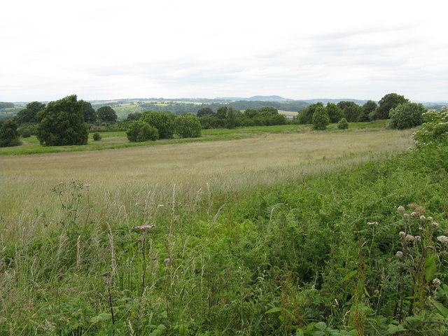 Bringsty Common grassland - geograph.org.uk - 860747