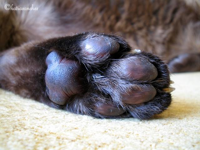 Cat S Paw Theory Game Of Thrones