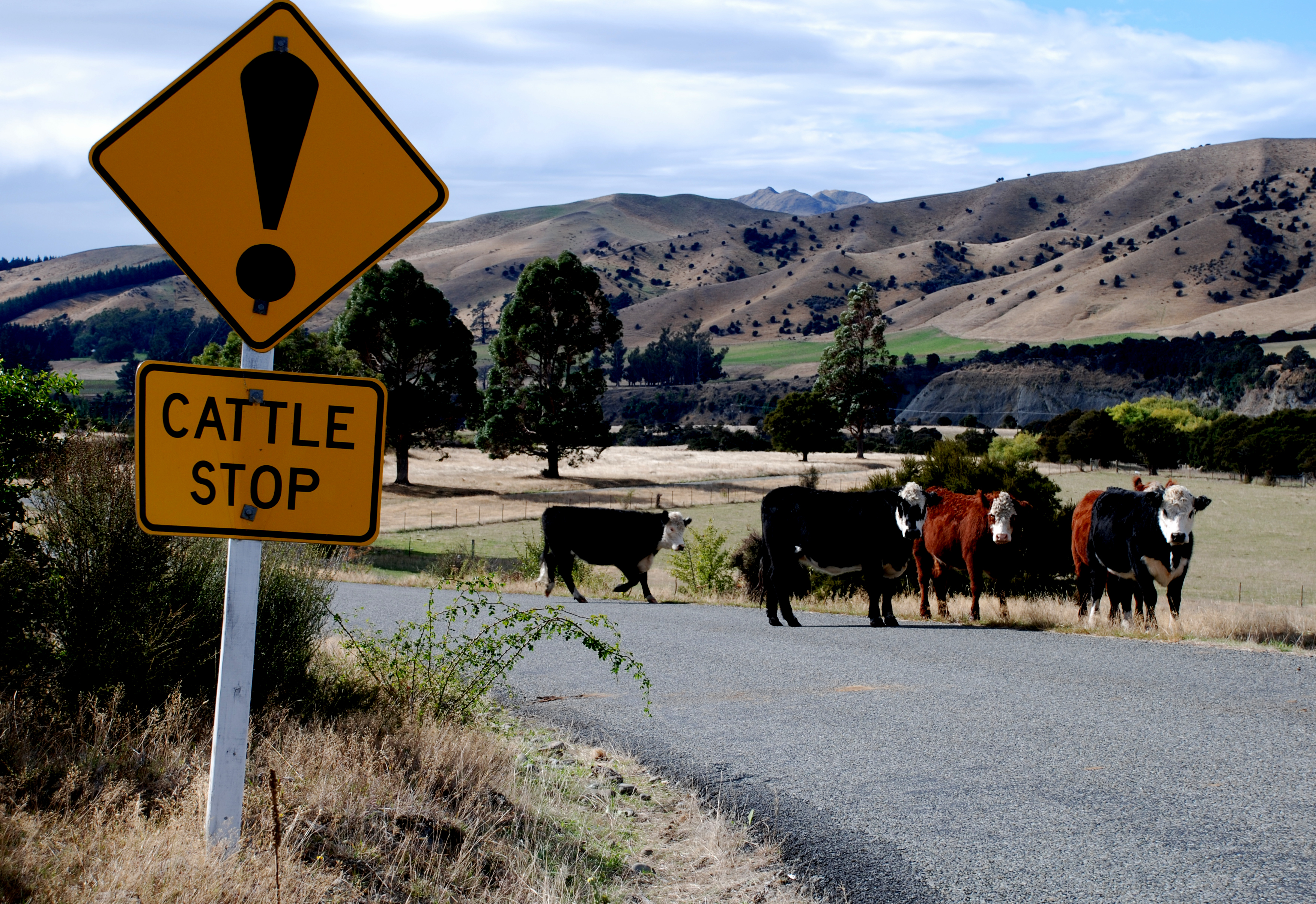 "ewealandroadsignwarningofa""cattlestop""cattlegridcattleguard"